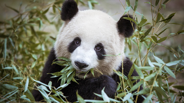 03_Bild_Landingpage-Bambus